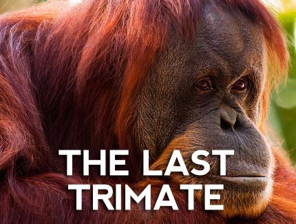 OrangutansLast_430